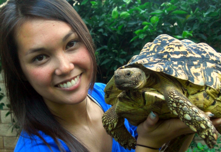 Hiccups, the pet tortoise of Virginia Nussey