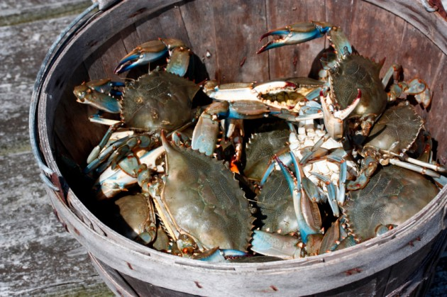 crabs-in-a-bucket