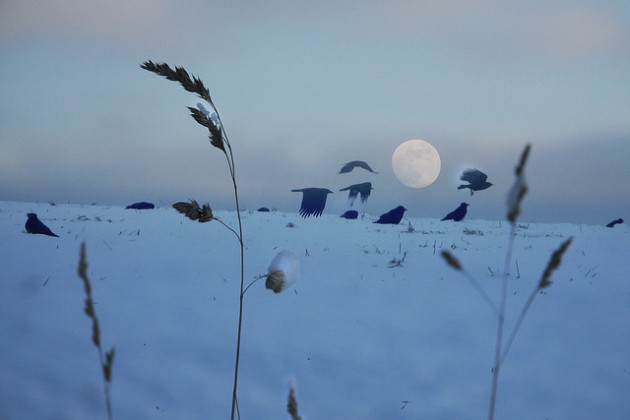 wheres-raven-january-2012