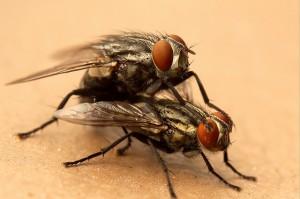 fly-sex