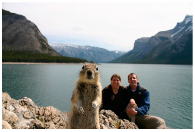 Squirrel photobomb in NatGeo.