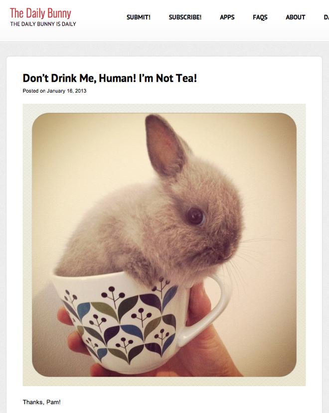 daily-bunny