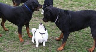small-dog-big-dogs