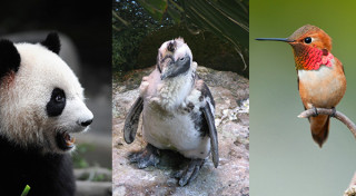 Google Panda, Penguin and Hummingbird Updates