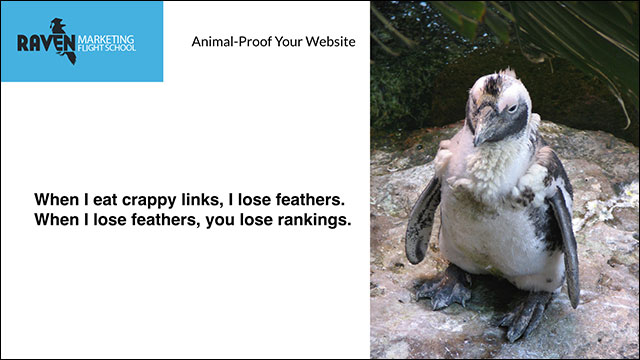 Google Penguine Update for Animal proof websites