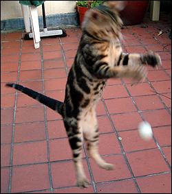 ping-cat