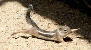 Squirrel Stretching